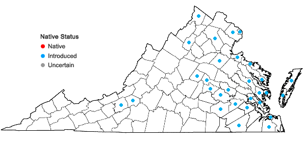 Locations ofRumex pulcher L. in Virginia