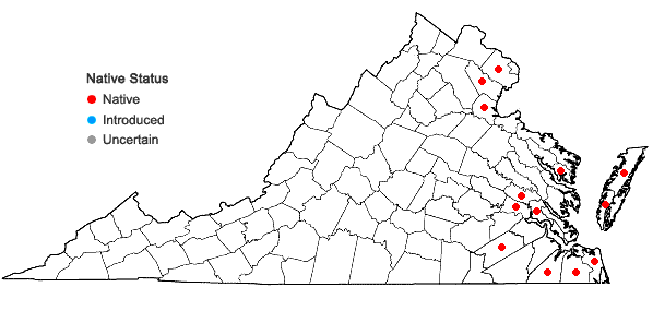 Locations ofSabatia dodecandra (L.) BSP in Virginia