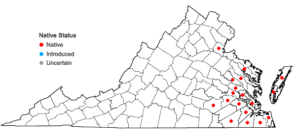Locations ofSacciolepis striata (L.) Nash in Virginia