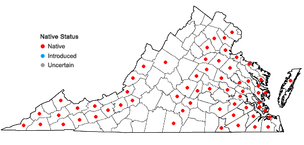 Locations ofSagittaria australis (J.G.Smith) Small in Virginia