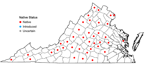 Locations ofSalvia urticifolia L. in Virginia