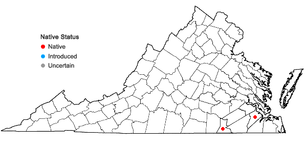 Locations ofSanicula canadensis L. var. floridana (Bicknell) H. Wolff in Virginia