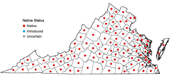 Locations ofSanicula canadensis L. var. canadensis in Virginia