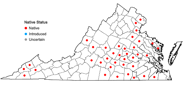 Locations ofSanicula smallii Bickn. in Virginia