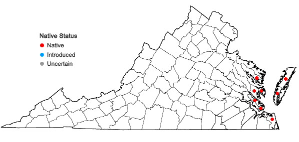 Locations ofSarcocornia pacifica (Standley) A.J. Scott in Virginia