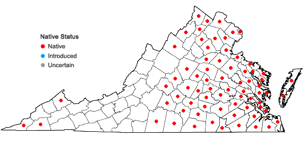 Locations ofSaururus cernuus L. in Virginia