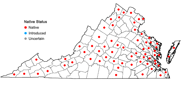 Locations ofSchoenoplectus pungens (Vahl) Palla var. pungens in Virginia