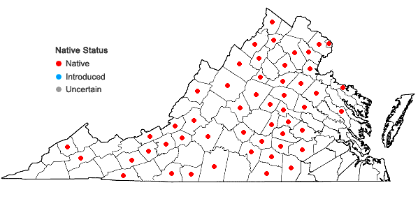 Locations ofSchoenoplectus purshianus (Fernald) Strong var. purshianus in Virginia