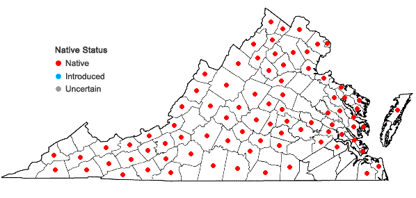 Locations ofSchoenoplectus tabernaemontani (Gmelin) Palla in Virginia