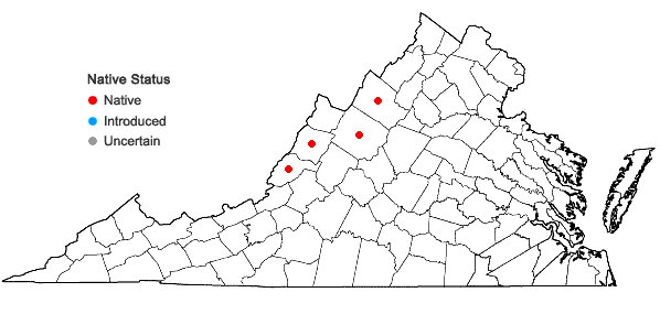 Locations ofScirpus ancistrochaetus Schuyler in Virginia