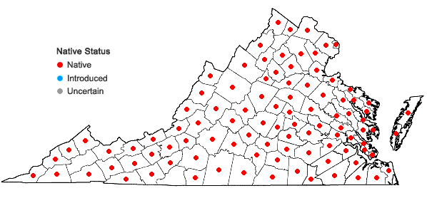 Locations ofScirpus cyperinus (L.) Kunth in Virginia
