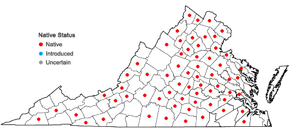Locations ofScirpus georgianus Harper in Virginia