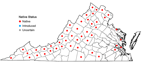 Locations ofScirpus pendulus Muhlenberg in Virginia