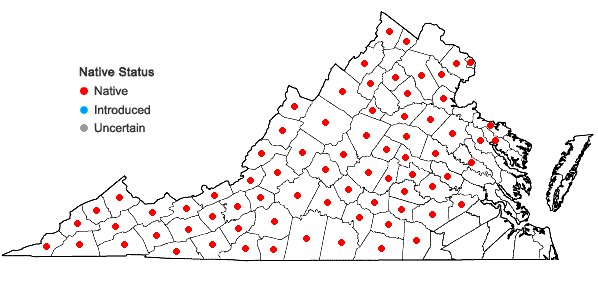Locations ofScirpus polyphyllus Vahl in Virginia