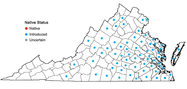 Locations ofScleranthus annuus L. in Virginia