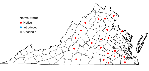 Locations ofScleria pauciflora Muhl. ex Willd. var. caroliniana A.W. Wood in Virginia