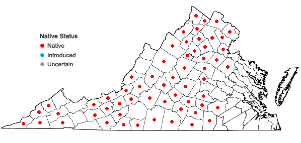 Locations ofScutellaria serrata Andr. in Virginia