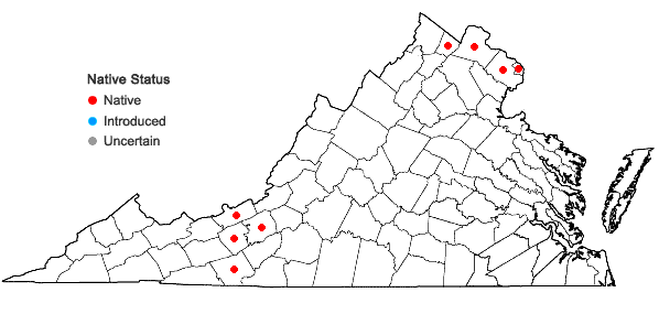 Locations ofSenecio suaveolens (L.) Ell. in Virginia