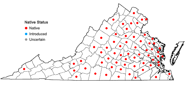 Locations ofSericocarpus linifolius (L.) B.S.P. in Virginia