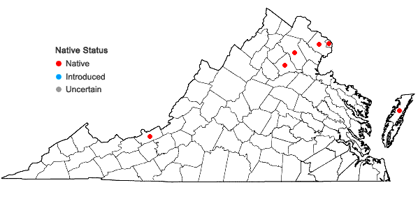 Locations ofSilene nivea (Nutt.) Muhl.  ex Otth in Virginia