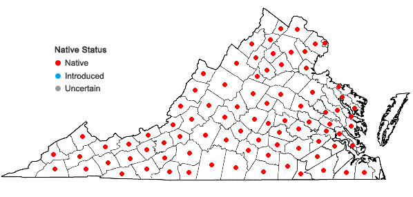 Locations ofSilene stellata (L.) Ait.  f. in Virginia