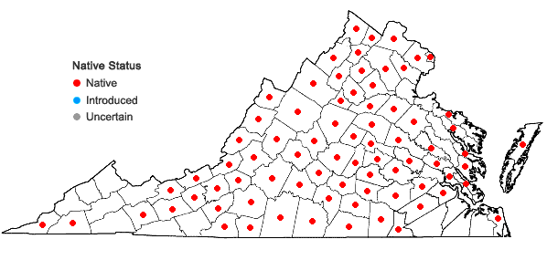 Locations ofSilphium asteriscus L. in Virginia