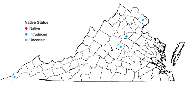 Locations ofSinapis arvensis Linnaeus in Virginia