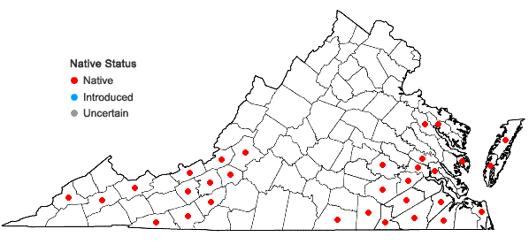 Locations ofSisyrinchium atlanticum Bickn. in Virginia