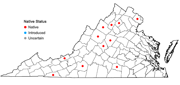 Locations ofSolenostoma gracillimum (Sm.) R.M. Schust. in Virginia