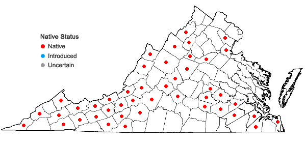 Locations ofSolidago arguta Ait. var. caroliniana Gray in Virginia