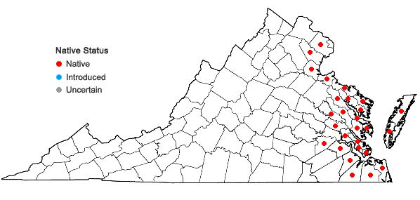 Locations ofSpartina cynosuroides (L.) Roth in Virginia