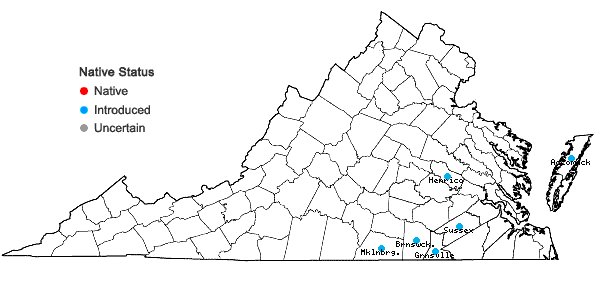 Locations ofSpergula pentandra L. in Virginia