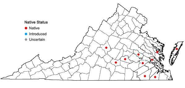 Locations ofSphaerocarpos texanus Austin in Virginia