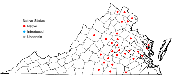Locations ofSpiranthes tuberosa Raf. in Virginia