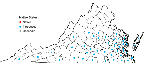Locations ofSporobolus indicus (L.) R. Br. in Virginia