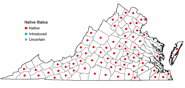 Locations ofSporobolus vaginiflorus (Torr. ex Gray) Wood var. vaginiflorus in Virginia