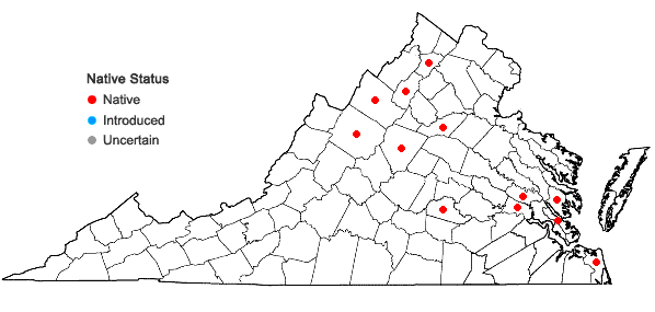 Locations ofStachys hyssopifolia Michx. in Virginia