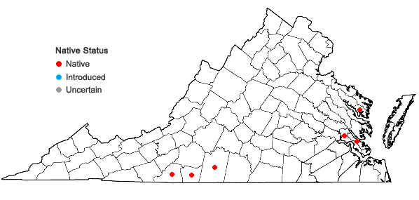Locations ofStewartia ovata (Cav.) Weatherby in Virginia