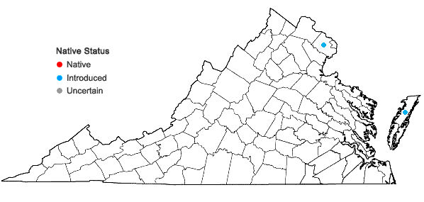 Locations ofStrophostyles leiosperma (Torr. & Gray) Piper in Virginia