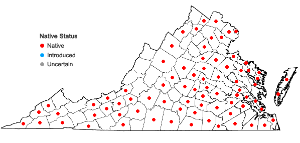 Locations ofSymphyotrichum dumosum (L.) Nesom var. dumosum in Virginia