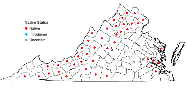 Locations ofSymphyotrichum laeve (L.) A. & D. Love var. laeve in Virginia