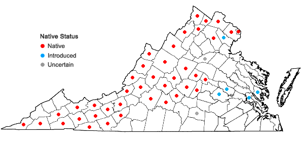 Locations ofSymphyotrichum novae-angliae (L.) Nesom in Virginia