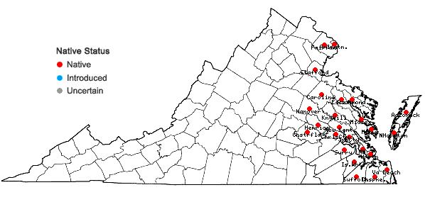 Locations ofSymphyotrichum novi-belgii (L.) Nesom in Virginia
