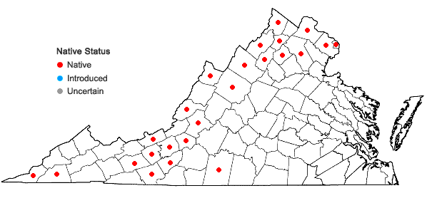 Locations ofSymphyotrichum oblongifolium (Nutt.) Nesom in Virginia