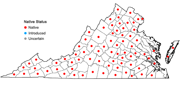 Locations ofSymphyotrichum patens (Ait.) Nesom var. patens in Virginia