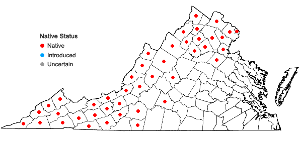 Locations ofSymphyotrichum prenanthoides (Muhl. ex Willd.) Nesom in Virginia