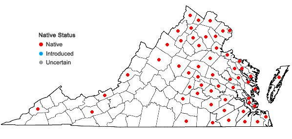 Locations ofSymphyotrichum racemosum (Ell.) Nesom var. racemosum in Virginia
