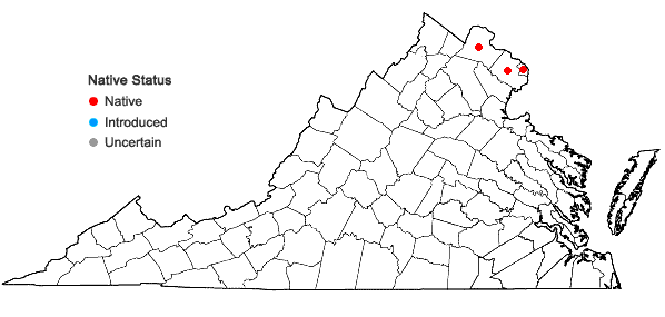 Locations ofSymphyotrichum shortii (Lindl.) Nesom in Virginia