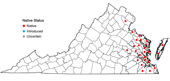 Locations ofSymphyotrichum tenuifolium (L.) Nesom in Virginia