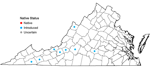 Locations ofSymphytum officinale L. in Virginia